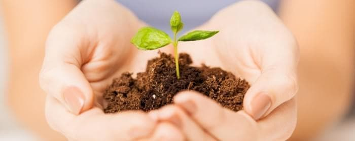 Accountancy image - person holding a small plant with soil